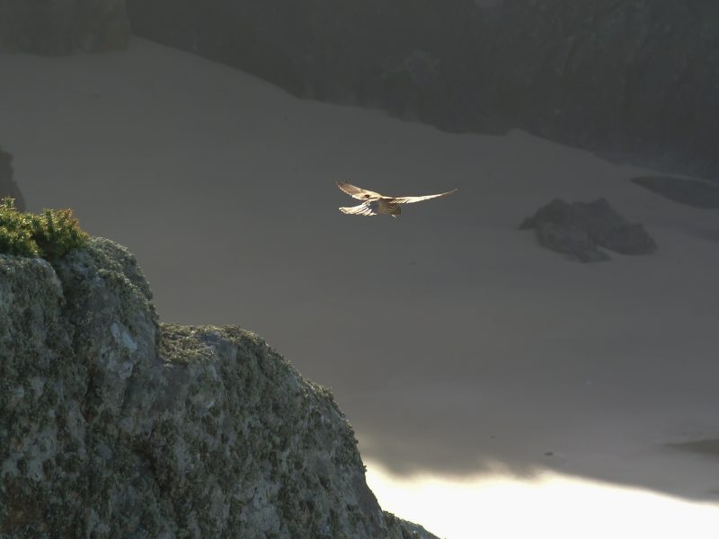 Glide.jpg